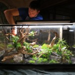 workshop aquascaping