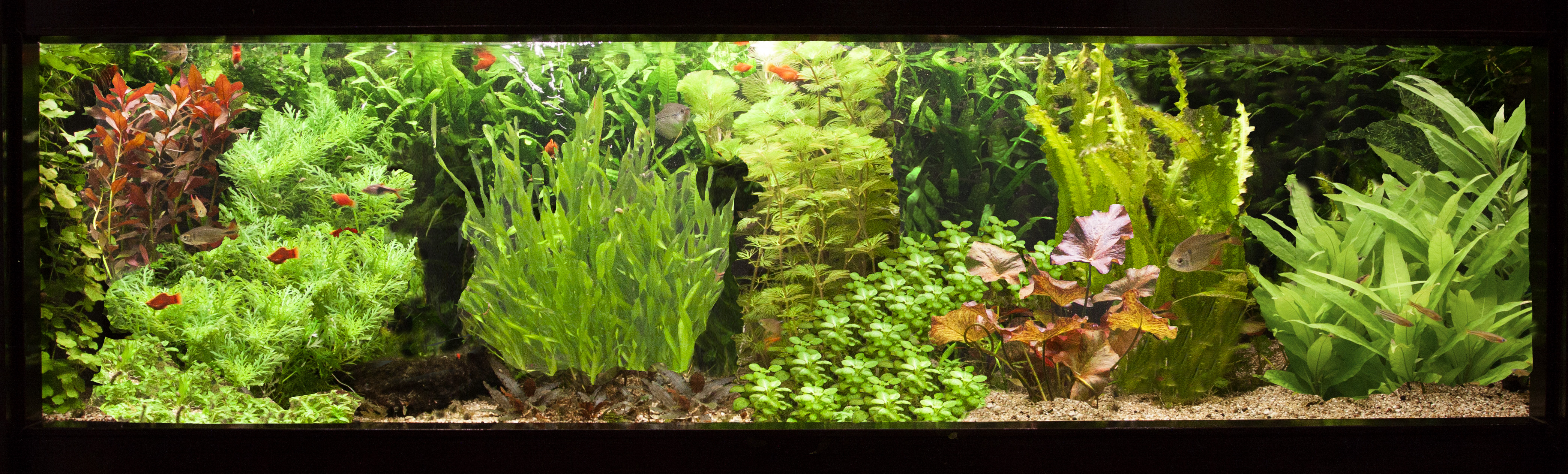 Workshop Aquarium inrichten  u2013Aponogeton