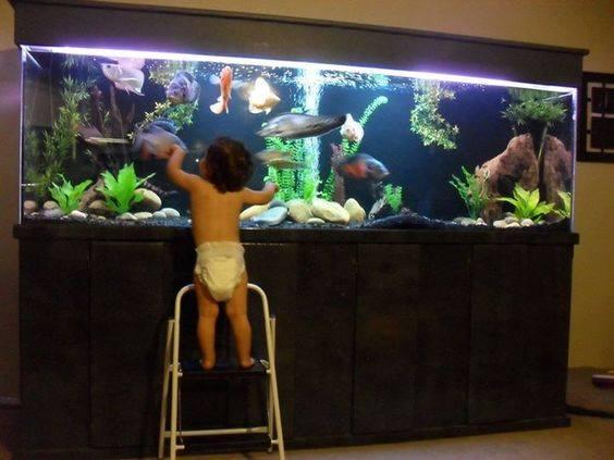 vissen controleren