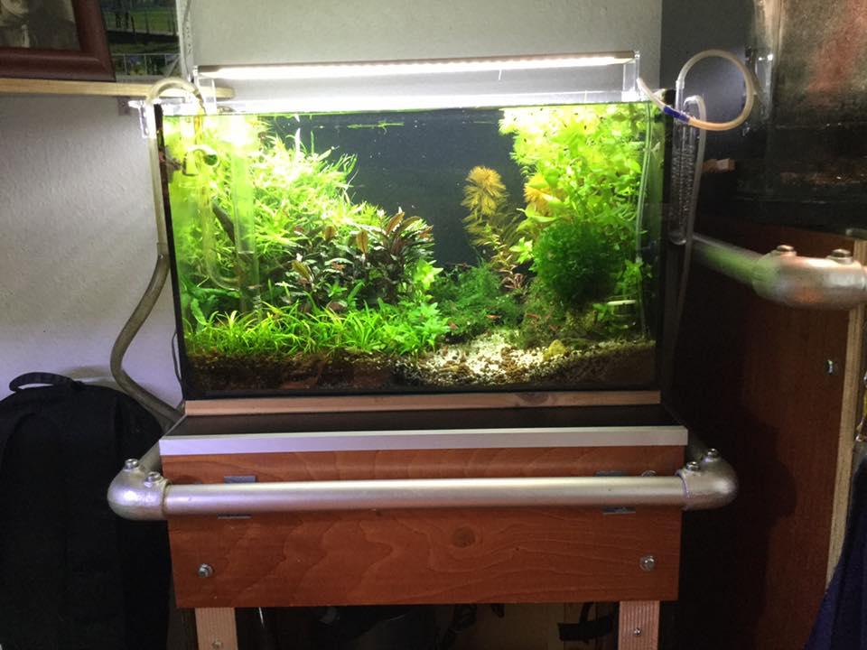 bekijk je aquariumplanten