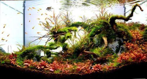 aquascape met hout