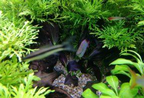 CO2 in het aquarium onmisbaar of niet