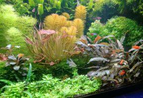 CO2 laat aquariumplanten groeien