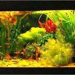 aquariumplanten voeding
